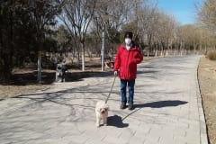 0-Walking-the-Dog