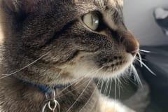 Pet-Entry-2-Liam